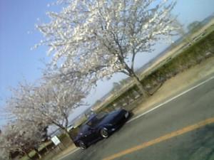 霞ヶ浦湖畔の桜とMR2AW11